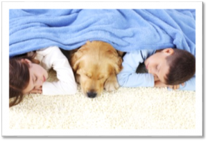 safe carpet cleaning gold coast