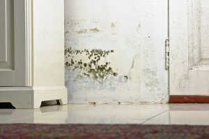 mould remediation gold coast